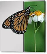 Blank Greeting Card 5 Canvas Print