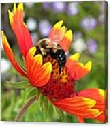 Blanket Flower And Bumblebee Canvas Print