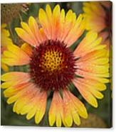 Blanket Flower Canvas Print
