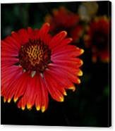 Blanket Flower I  Canvas Print