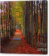 Blanket Of Red Leaves Canvas Print