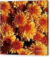 Blaze Of Flowers Canvas Print