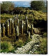 Blazing A New Trail  Canvas Print