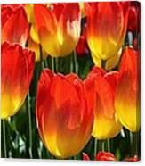 Blazing Color Canvas Print