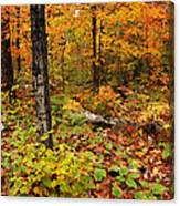 Blazing Forest Canvas Print