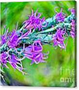 Blazing Star Canvas Print