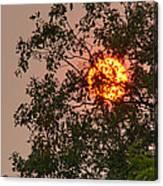 Blazing Sun Hiding Behind A Tree Canvas Print