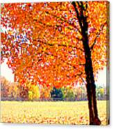Blazing Tree Canvas Print