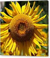 Blazing Yellow Sunflower Canvas Print