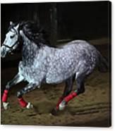 Blazzing Horse Canvas Print