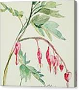 Bleeding Hearts IIi Canvas Print