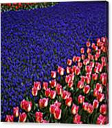 Blend Of Tulips Canvas Print
