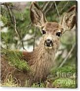 Blending In The Pines Canvas Print
