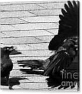 Blind Crow Canvas Print