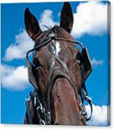 Blinders Because All Distractions Are Equal Canvas Print