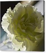 Blissful White Canvas Print