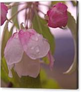 Blomming In The Rain Canvas Print