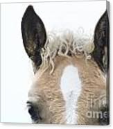Blonde Horse Canvas Print