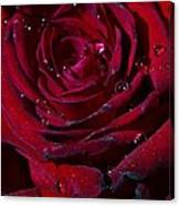 Blood Red Rose Canvas Print