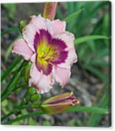 Blood Throated Lily 1 Canvas Print