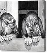 Bloodhound Puppies Dog Portrait  Canvas Print