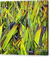 Bloodroot Abstract Canvas Print