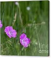 Bloody Cranesbill Wild Flowers Canvas Print