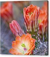 Bloom In Orange Canvas Print
