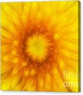Bloom Of Dandelion Canvas Print