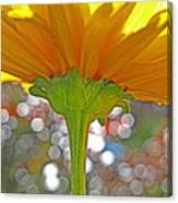 Bloom Yellow Daisy Canvas Print