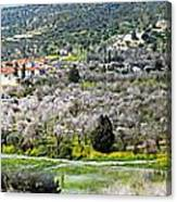 Blooming Almond Trees Canvas Print