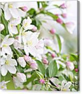 Blooming Apple Tree Canvas Print