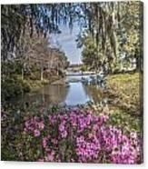 Blooming Azaleias At Middleton Place Plantation Canvas Print