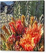Blooming Barrel Canvas Print