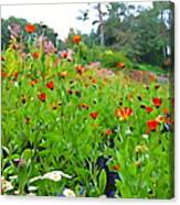 Blooming Beauties Canvas Print