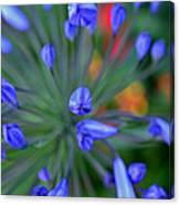 Blooming Blues Canvas Print