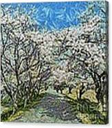 Blooming Cherry Tree Avenue Canvas Print