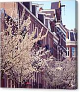 Blooming Decoration Of The Streets. Pink Spring In Amsterdam Canvas Print