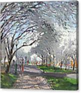 Blooming In Niagara Park Canvas Print