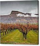 Blooming Orchards 2 Canvas Print