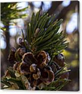 Blooming Pinecone Canvas Print