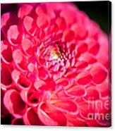 Blooming Red Flower Canvas Print