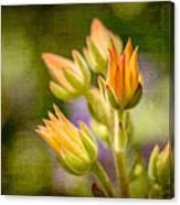 Blooming Succulents I Canvas Print