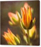 Blooming Succulents V Canvas Print