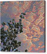 Blooming Tree And Sky Canvas Print