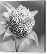 Blooming Weed Canvas Print