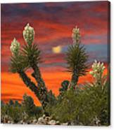 Full Blooming Yucca Canvas Print