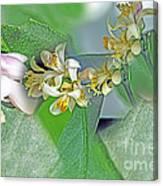 Blooms Of Lemon Tree Canvas Print