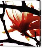 Blossom Abstract Canvas Print