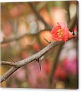 Blossom Amidst The Thorns Canvas Print